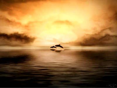 golfinhos (1)